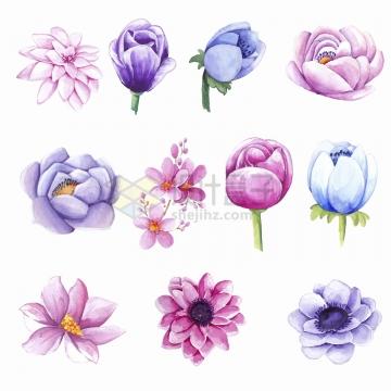 长寿花郁金香莲花桃花等水彩画花朵鲜花png图片免抠矢量素材