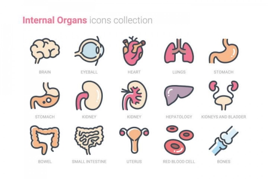 15款医疗医学人体器官组织高光图标icon图片免抠素材
