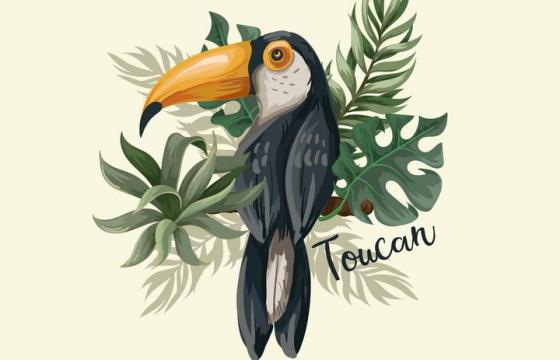 彩绘巨嘴鸟野生动物图片免抠矢量图素材
