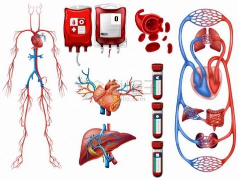 血液循环系统呼吸系统静脉动脉心脏血型等人体器官组织png图片免抠矢量素材