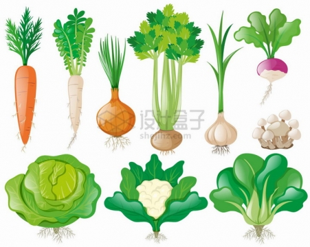 带叶子的胡萝卜洋葱芹菜包菜花菜青菜等美味蔬菜png图片免抠矢量素材