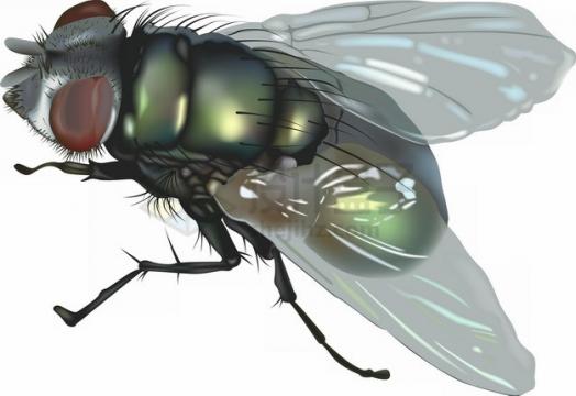 一只绿头苍蝇png图片素材