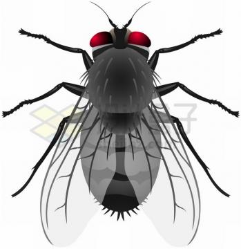 一只红眼苍蝇png图片素材