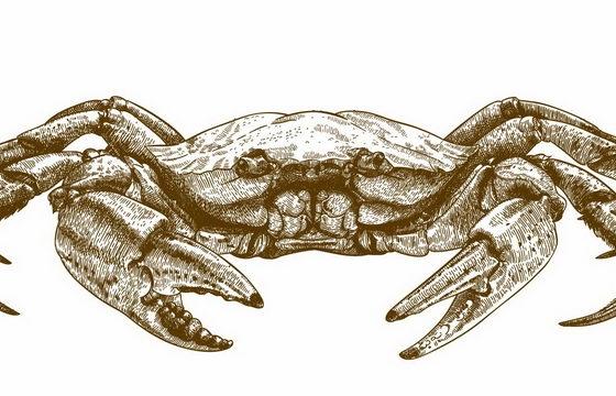 素描插画风格螃蟹大闸蟹美味海鲜png图片免抠矢量素材