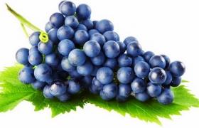 叶子上的赤霞珠葡萄紫色葡萄png图片素材