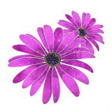 盛开的荷兰菊紫色鲜花png免抠图片素材