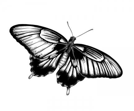 黑色手绘风格张开翅膀的蝴蝶昆虫免抠矢量图素材