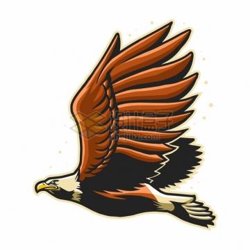 飞翔中的展翅雄鹰老鹰侧视图579600png图片素材
