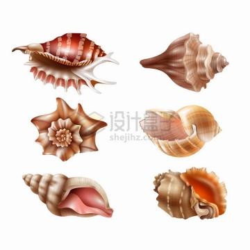 6种不同形状的海螺贝壳png图片免抠矢量素材
