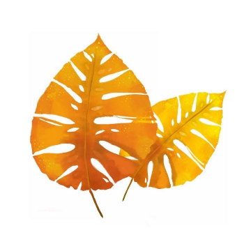 两片秋天枯黄的树叶免抠PNG图片素材