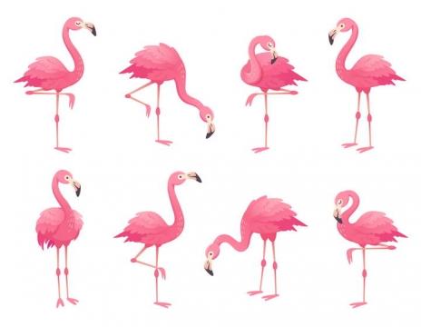 8款粉色的火烈鸟动物图片免抠素材