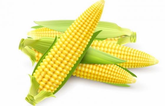 几根刚采摘的玉米棒png图片免抠eps矢量素材