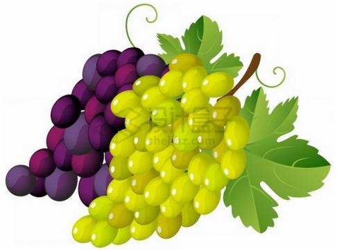 彩绘紫葡萄和青葡萄png图片素材