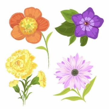 水彩画风格盛开的午时花喇叭花菊花等鲜花花朵花卉png图片免抠矢量素材