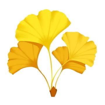几片黄色的秋天银杏树叶免抠PNG图片素材