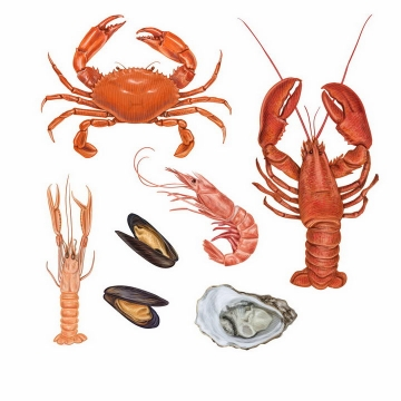 逼真的大闸蟹螃蟹澳洲大龙虾波士顿大龙虾生蚝北极虾等美味海鲜海产品png图片免抠矢量素材