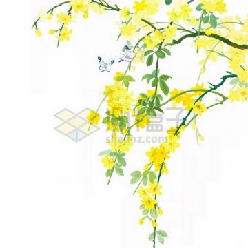 枝头上的迎春花498872png免抠图片素材