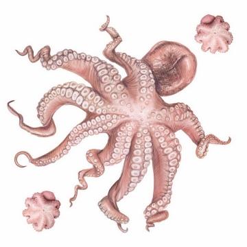 伸着触手的章鱼和章鱼丸子美味海鲜海产品png图片免抠矢量素材