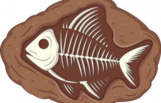 插画风格鱼类的化石古生物考古图片免抠素材