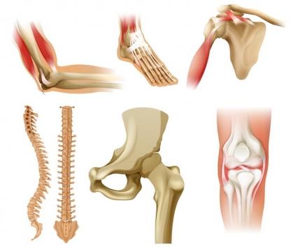 6款人体局部骨骼肌肉解剖图图片免抠素材