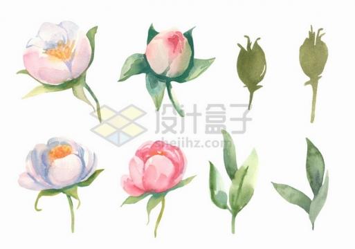 粉红色白色茉莉花鲜花花朵花卉和叶子水彩插画png图片素材