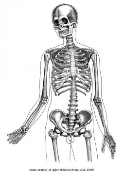 人体骷髅骨骼骨架黑色手绘素描风格图片免抠素材