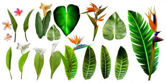 各种热带植物的绿叶和花朵花卉图片免抠素材合集