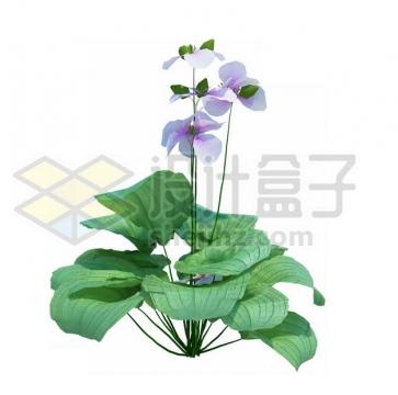 开了淡紫色小花的绿植845416psd/png图片素材