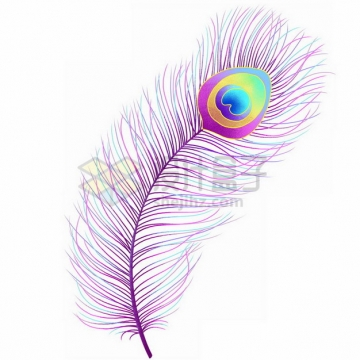 紫色的孔雀羽毛343782png免抠图片素材