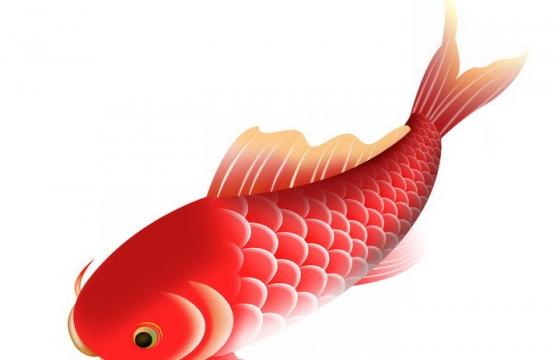 中国传统的鲤鱼和锦鲤图案png图片免抠素材